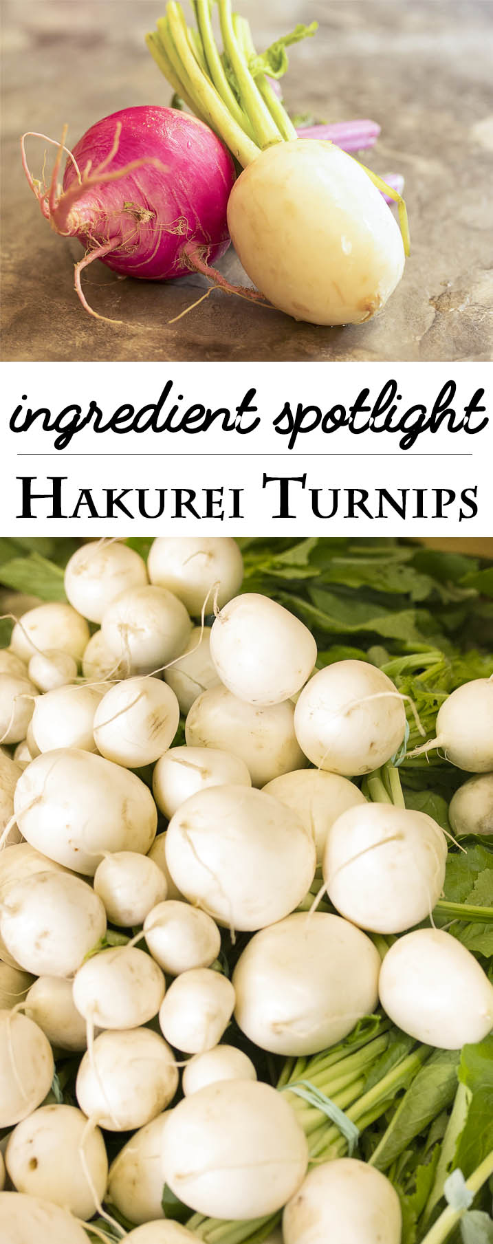 Ingredient Spotlight: Hakurei Turnips - Turnips are not just for cooler weather. Mild, even sweet Hakurei turnips are wonderful in salads, simple gratins, sliced into sandwiches, and more! | justalittlebitofbacon.com
