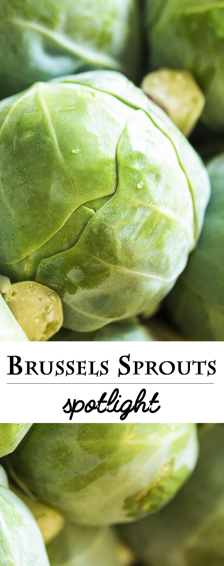 This Brussels sprouts spotlight tells you everything you wanted to know about Brussels sprouts. How to cook them, where they come from, how they taste, and more! | justalittlebitofbacon.com