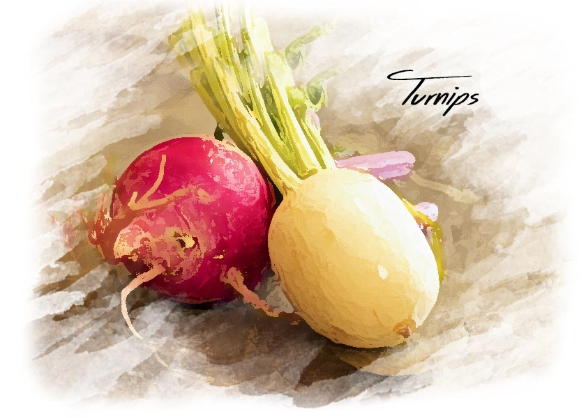 Watercolor style photo of turnips