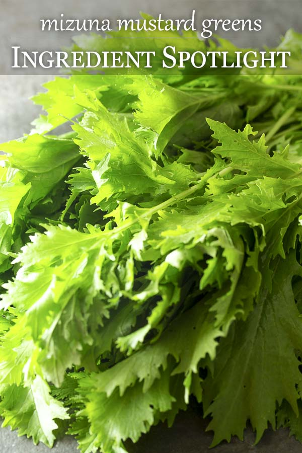 What is mizuna? What do you make with these leafy greens? What are the health benefits? Find recipes, history, and more in this ingredient spotlight. | justalittlebitofbacon.com #mizuna #mustardgreens #japanesefood #csavegetables